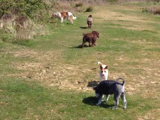 A lovely walk in the sun with our dog buddies!