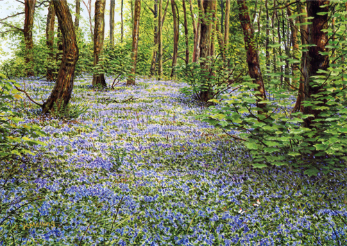 Bluebells and Orange Tips. Painting by Keith Melling