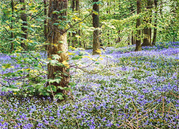 Bluebells, Copy Clough Wood. Painting: Keith Melling