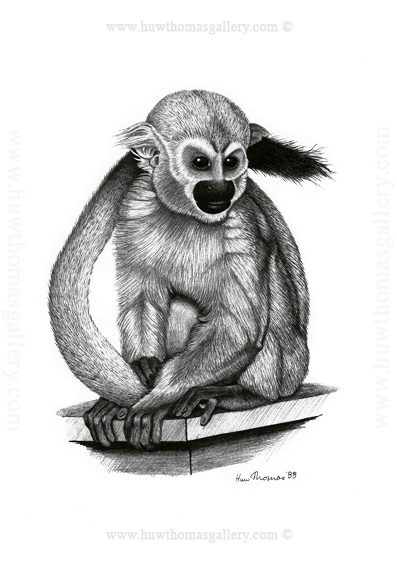 Squirrel Monkey Print (unframed)