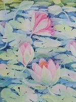 ''waterlily Pond''   Print