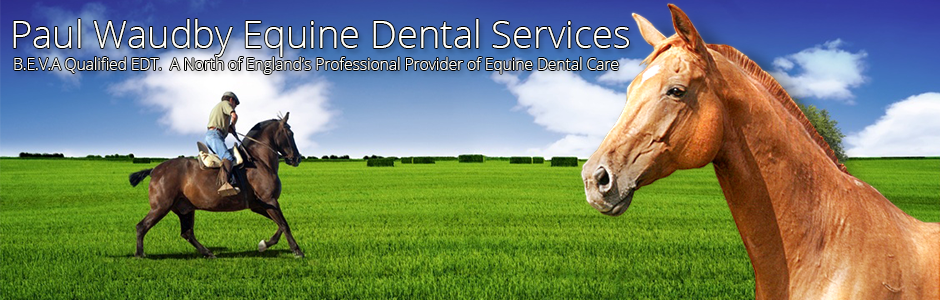 Equine Dental Qualifications and training
