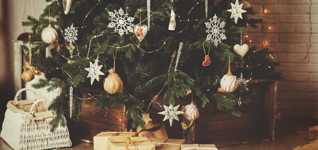 Cheshire Christmas Trees | Nordmann, Noble and Lodgepole Pine | Growers and  Wholesalers - Cheshire Christmas Trees Nordmann, Noble And Lodgepole Pine