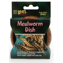 Lee's meal worm dish