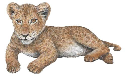 Lion Cub Sticker