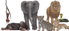 Wild animal wall stickers