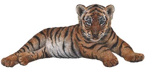Jungle animals - Tiger cub wall sticker