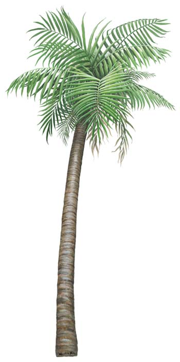 Palm tree wall sticker std