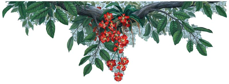 Jungle-RedBorder Jungle Plants - Red Flower Border Sticker