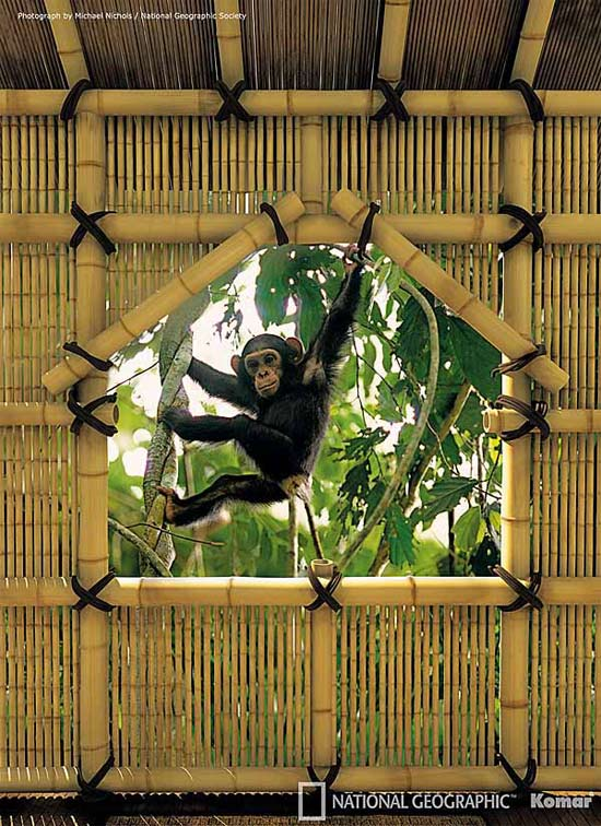 Monkey Treehouse Wallpaper Mural Jungle Themes Shop