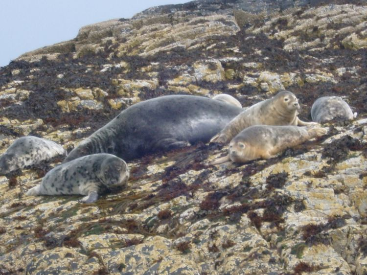 Seals on the Farne Islands
