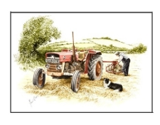 Massey Ferguson 135 by Michael Cooper