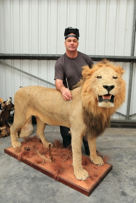 Full lion mounts,rob just finishing of the last little touches.