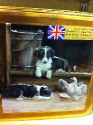 Puppies & Doves Tin
