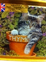 Kitten In Plant Pot Tin