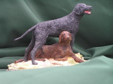 Curly Coated Retrieve �150.00