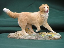 Nova Scotia Duck Toller �65.001
