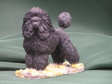 Minature poodle �36.00