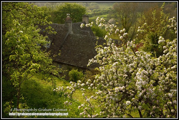 Spring Blossom and Cotswold Cottage, an original photo from Graham Coleman's Cotswold Landscapes