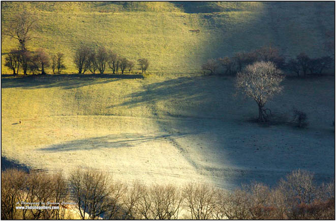 tree on a Brecon Hillside on frosty morning fine art landscape photography by Graham Coleman