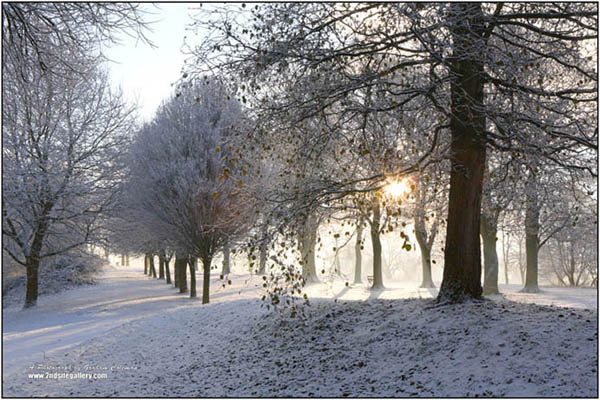 sun shining through the trees on snowy morning at Eastville park, framed landscapes by graham coleman