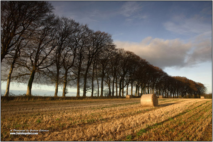 Beech Trees and Hay Bales, Cotswold Landsacape