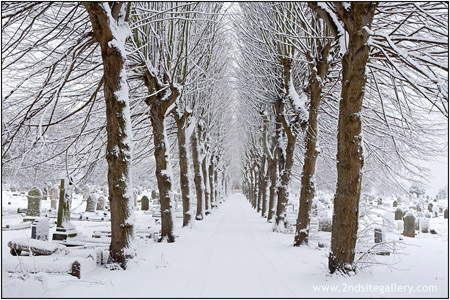 View of an avenue of trees in the snow