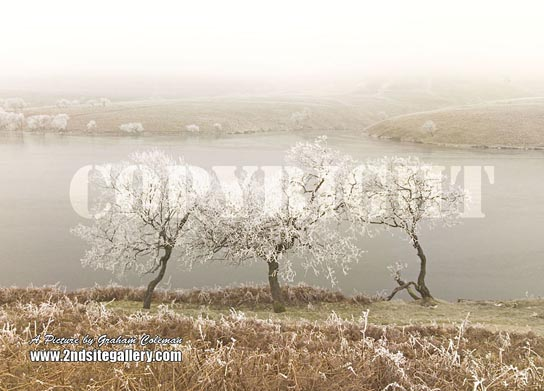 frozen trees Brecon