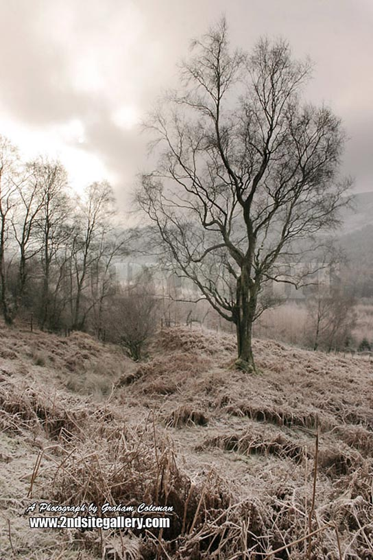 Frosty Morning inthe Brecons