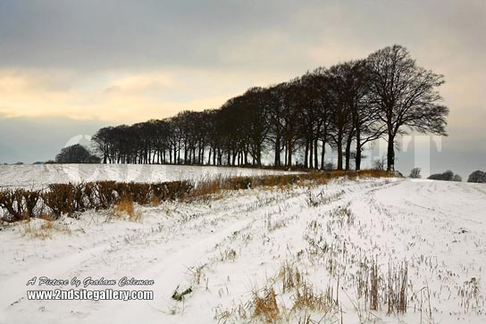 beech trees in the snow cotswold