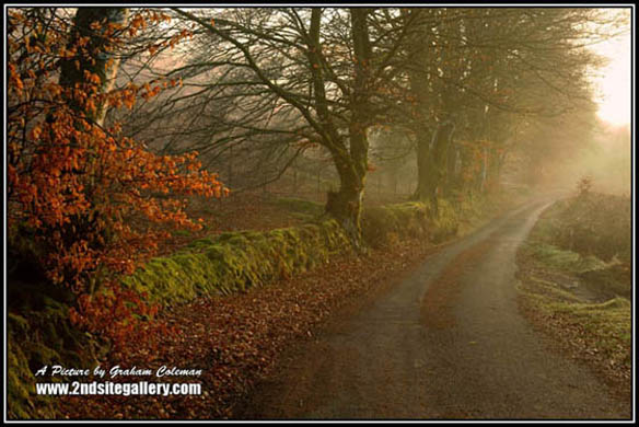 country lane in Exmoor on a sunny hazy morning, views of Exmoor by Somerset landscape photographer Graham Coleman