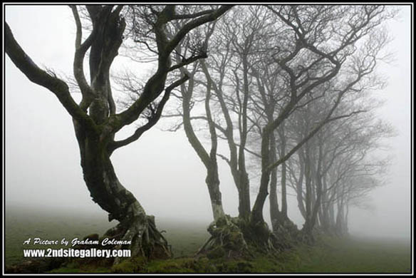 Trees in the mist, Exmoor landscape photographs