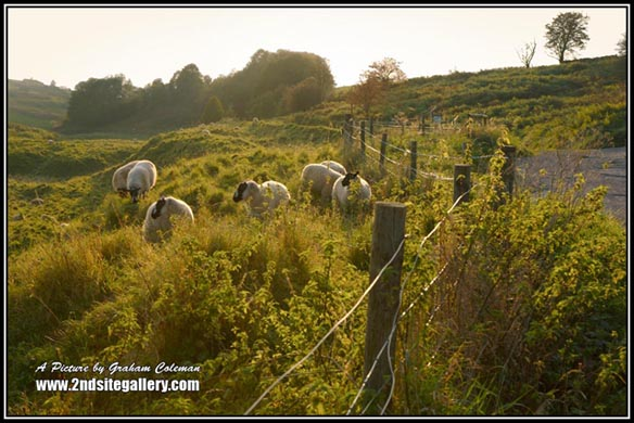 Landscapes of the Mendip hills in Somerset, sheep at Velvet Bottom