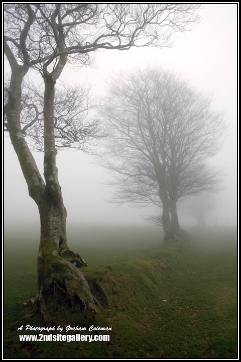 View of trees in the mist on Exmoor, Westcountry Landscape photography