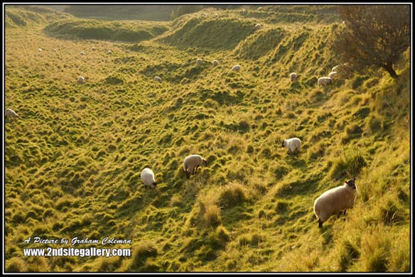 Sheep grazing at Velvet Bottom near Cheddar, Views of the Mendips by Graham Coleman