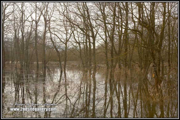 Reflection of Trees, Pictures of Chew valley, Views of the somerset  Countryside
