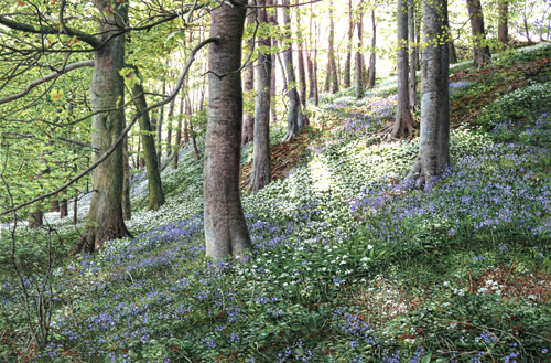 Bluebells and Ramsons -Yorkshire Dales. Keith Melling