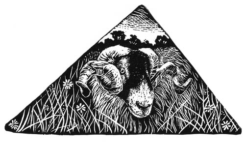A Swaledale Tup - Yorkshire Dales. Wood Engraving. Keith Melling