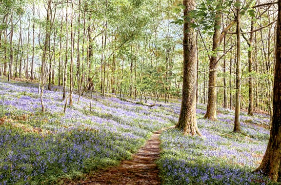 Bluebells, Brathay Woods, Lake District. Painting by Keith Melling