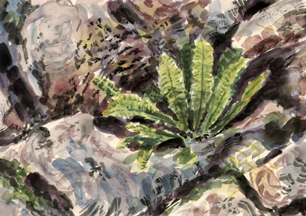 Hart's Tongue Fern and Limestone. Painting: Keith Melling
