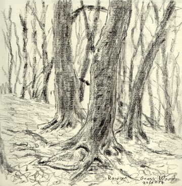 Grass Wood, Grassington, Yorkshire Dales. Sketch : Keith Melling