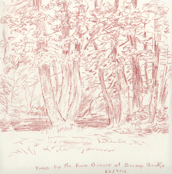 Trees at Dunsop Bridge, Forest of Bowland. Sketch Keith Melling