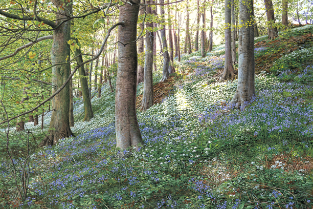 Bluebells and Ramsons. Painting: Keith Melling