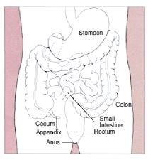 Colon Anatomy - Home Enema Kit from Detoxonline