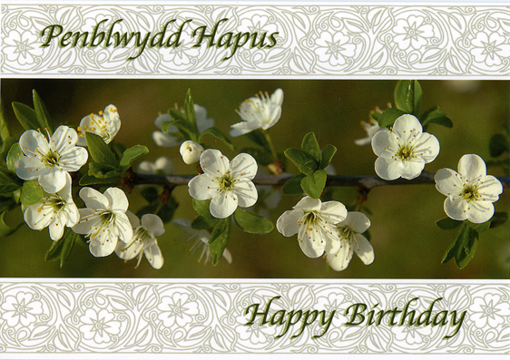 Design PBF 02 - Welsh Birthday Card - Penblwydd Hapus & Happy Birthday
