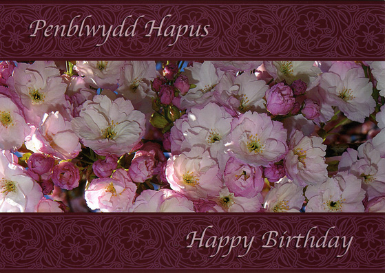 Design PBF 03 - Welsh Birthday Card - Penblwydd Hapus & Happy Birthday