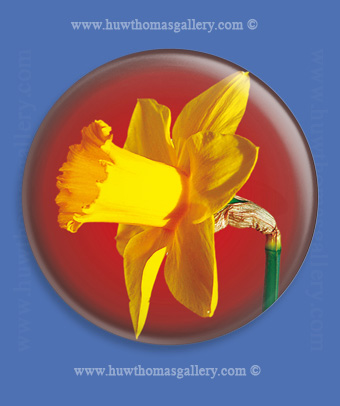 Welsh Daffodil Fridge Magnet - Red