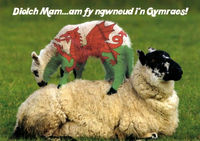 Mothers Day - Diolch Mam - Greeting in Welsh