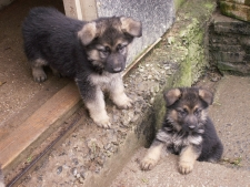 Two of Saphire's pups start to explore.
