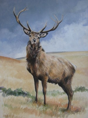 Study of a Red Deer